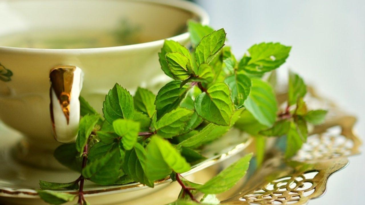poate supapă de ceai de menta cu pierderea în greutate