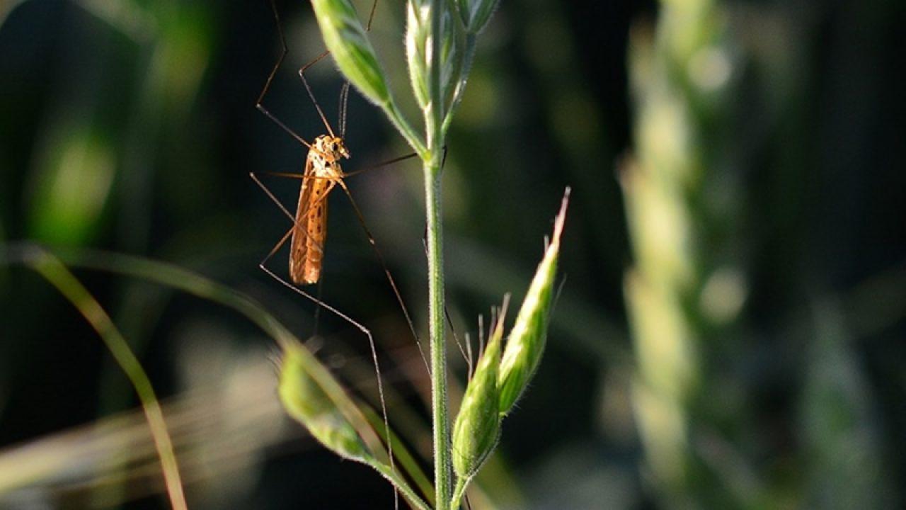 durere articulară mușcătura insectelor)