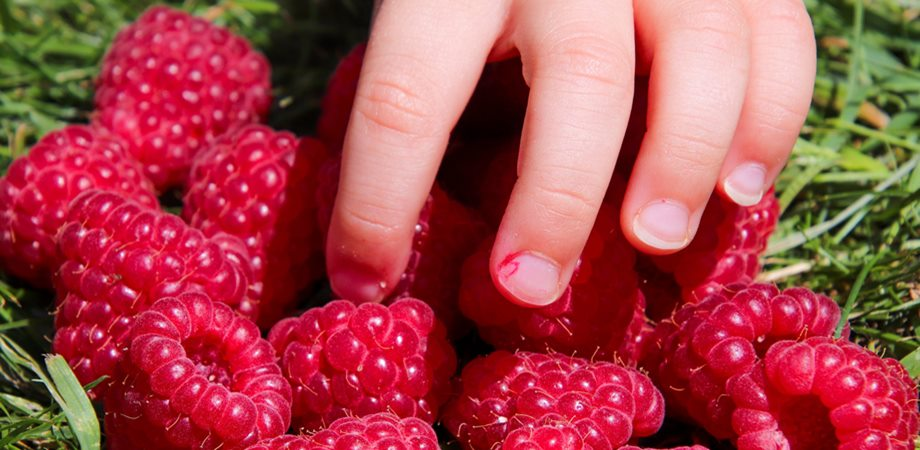 sucurile si fructele