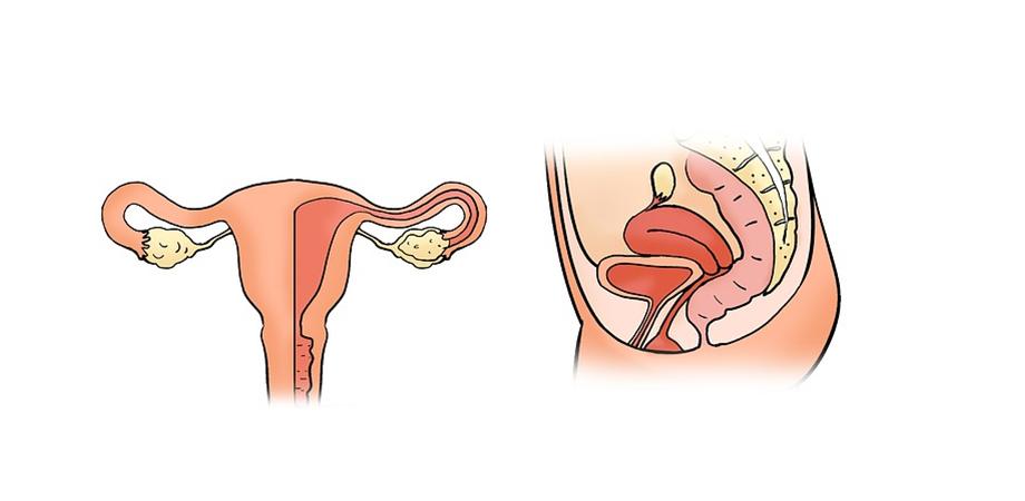 rolul mucusului cervical