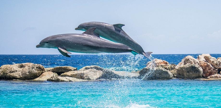 salturi delfini