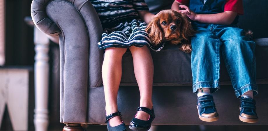 cum invatam copiii sa iubeasca animalele