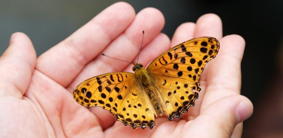 poezii despre insecte
